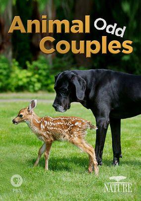 Odd Animal Relationships