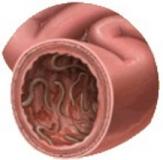 Blog parasites1