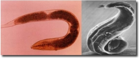 blog parasites10