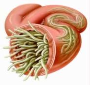 blog parasites2