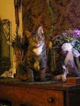 Isaiah, Sadie on dresser in window at carabetta photo session